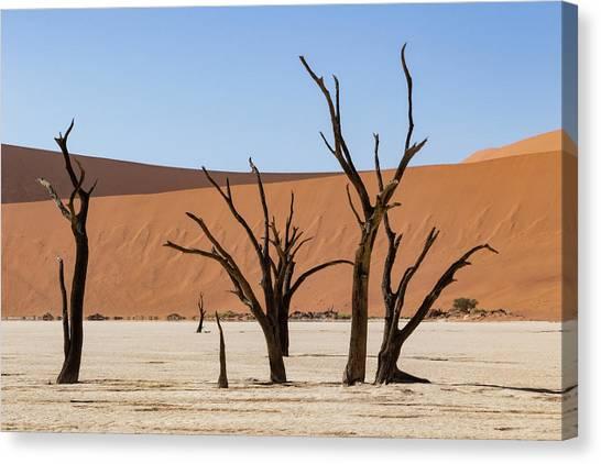 Deadvlei Desert Canvas Print