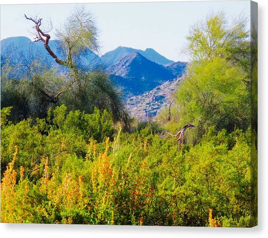 Deep Desert Valley In A Sonoran Desert Spring Canvas Print