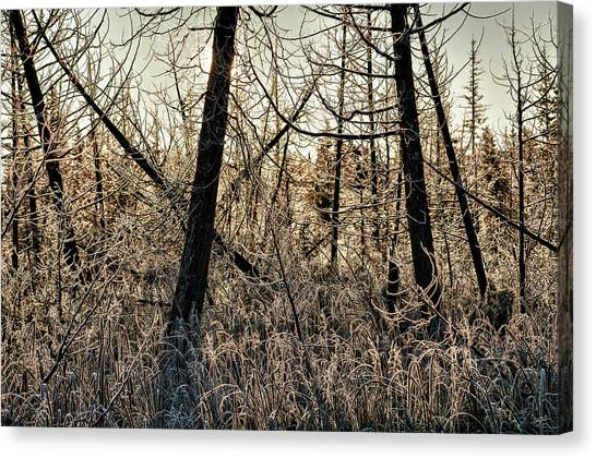 Deep Frost Canvas Print