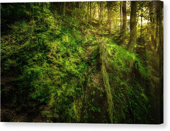 Canvas Print featuring the photograph Deep In The Forests Of Bavaria by David Morefield