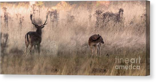 Deer In The Grasses Canvas Print