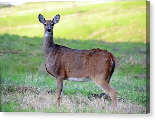 Canvas Print featuring the photograph Deer Standing In A Field by Angela Murdock