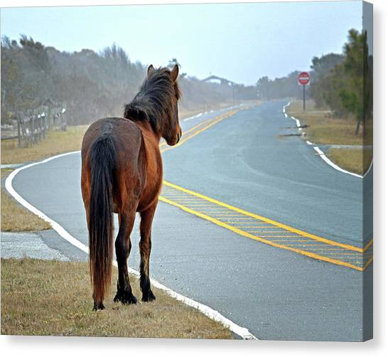 Canvas Print featuring the photograph Delegate's Pride Awaiting Tourists On Assateague Island by Bill Swartwout Fine Art Photography