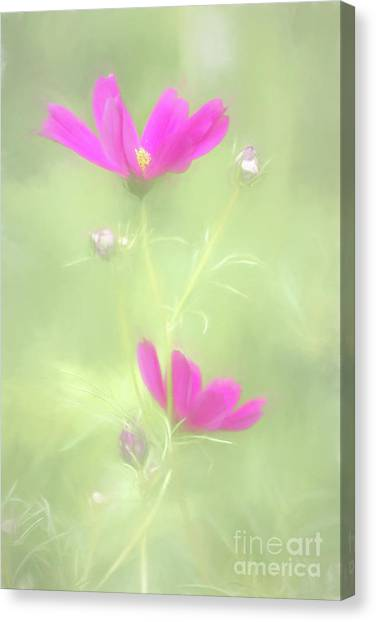 Delicate Painted Cosmos Canvas Print