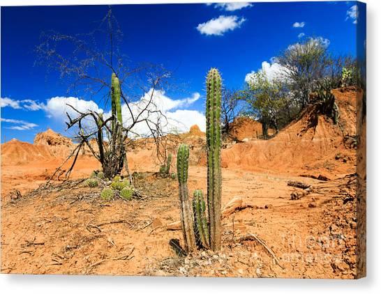 Stunning Canvas Print - Desert, Cactus In Desert, Tatacoa by Ilyshev Dmitry