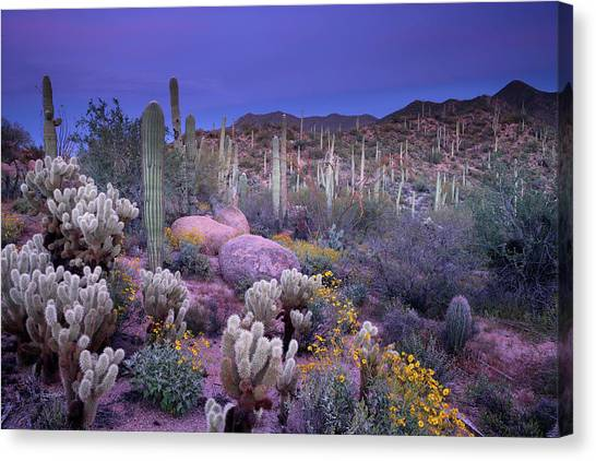 Desert Garden Canvas Print by Ericfoltz