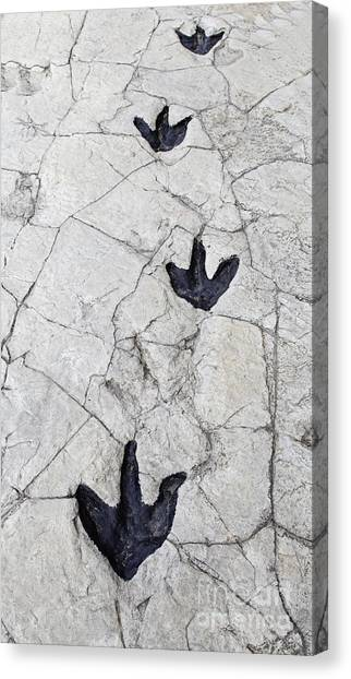 Zoology Canvas Print - Detail Of Dinosaur Tracks In Spain by Sergio Foto
