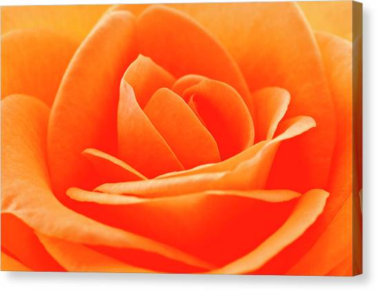 Woodcock Canvas Print - Detailed Close Up Of A Rose by Carolyn Woodcock