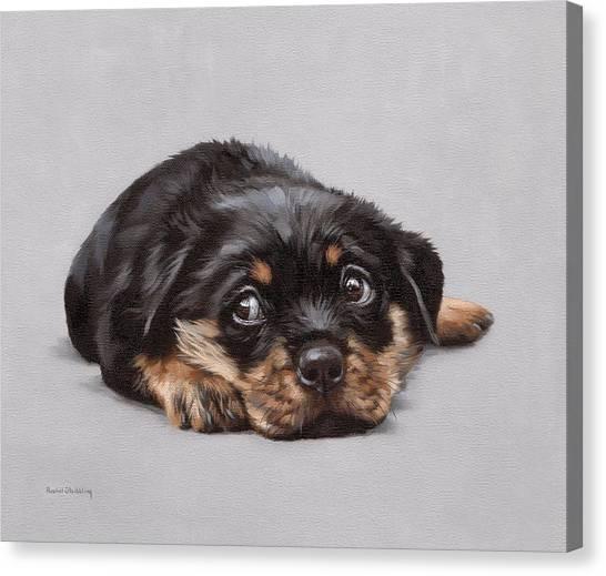 Rottweilers Canvas Print - Dexter by Rachel Stribbling