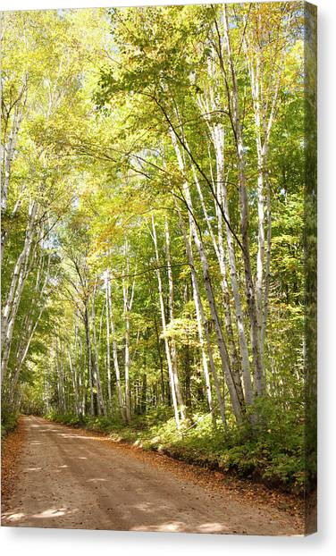 Thunder Bay Canvas Print - Dirt Road Lined With Trees In Autumn by Susan Dykstra / Design Pics