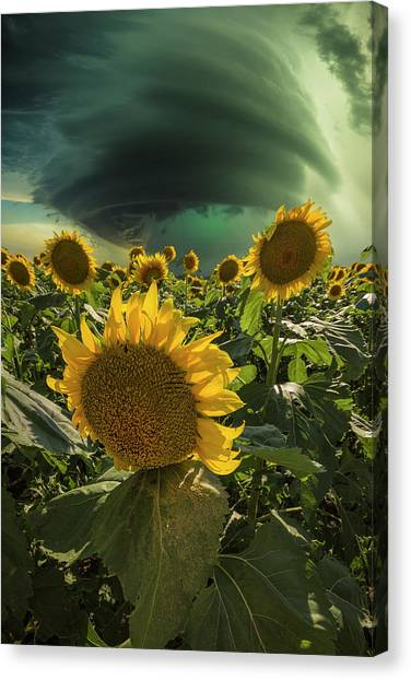 Canvas Print featuring the photograph Disarray  by Aaron J Groen