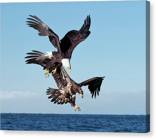 Diving Duo Canvas Print