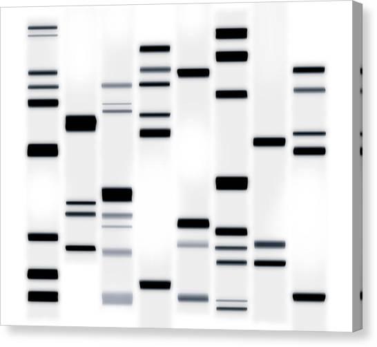 Molecule Canvas Print - Dna Art Black On White by Michael Tompsett