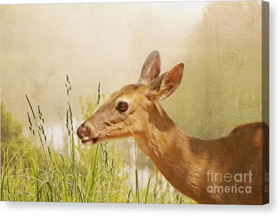 White-tailed Deer Canvas Print - Doe At Dawn by Laura D Young