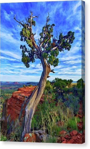 Doe Mountain Juniper Canvas Print