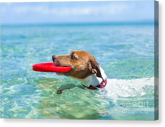 Exercising Canvas Print - Dog Catching A Red  Flying Disc And by Javier Brosch