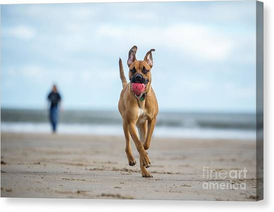 Purebred Canvas Print - Dog On The Beach by Rebeccaashworth
