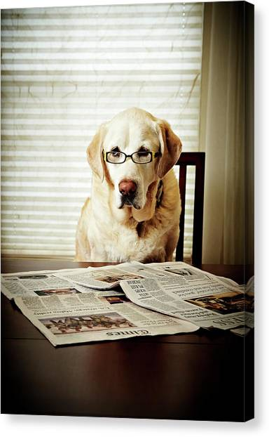 Dog Reading The Newspaper And Wearing Canvas Print