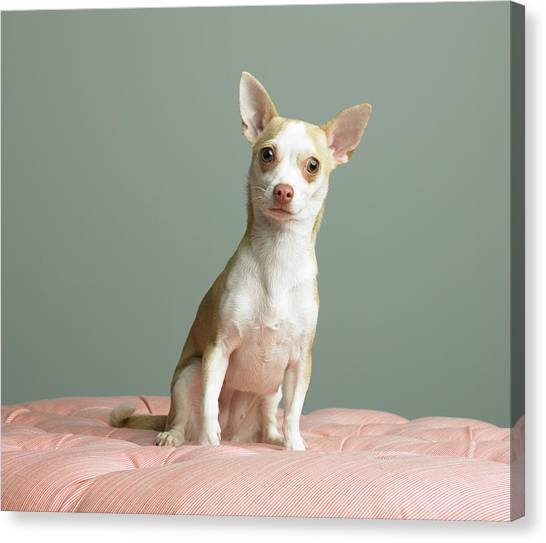 Dog Sitting On Cushion Canvas Print