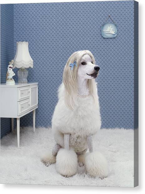 Drawers Canvas Print - Dog Sitting On Rug, Looking Away by Rainer Elstermann