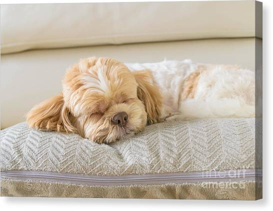 Relax Canvas Print - Dog Sleeping Comfortably On Big Soft by 632imagine