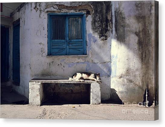 Dog Sleeps On A Bench Outdoor In Canvas Print by Sergio Capuzzimati