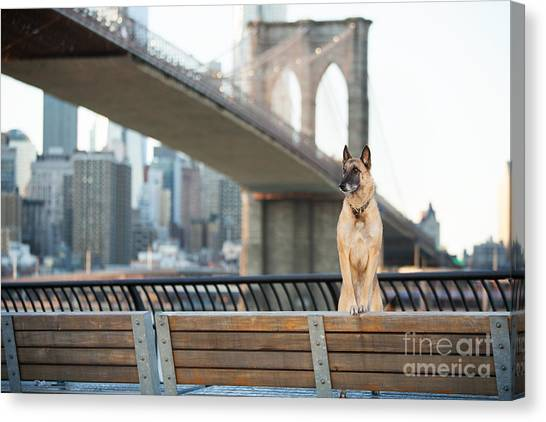 Urban Life Canvas Print - Dog Standing In Front Of Brooklyn by The Dog Photographer