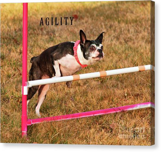 Doggie Agility  Canvas Print