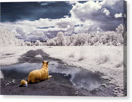 Canvas Print featuring the photograph Doggy Daydream by Nicole Young