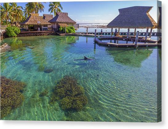 Snorkling Canvas Print - Dolphin In Mo'orea French Polynesia by Scott McGuire