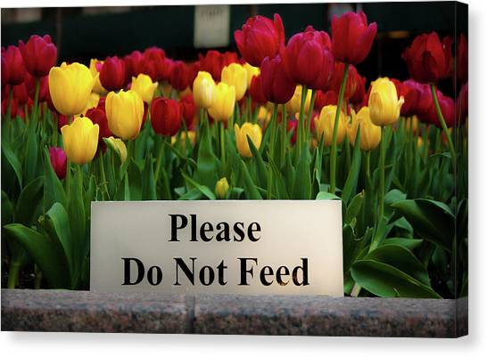 Dont Feed The Tulips Canvas Print