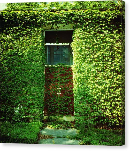 Doors Covered By Ivy Canvas Print by Silvia Otte