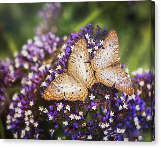 Anartia Jatrophae Canvas Print - Double Butterfly Wings  by Saija Lehtonen