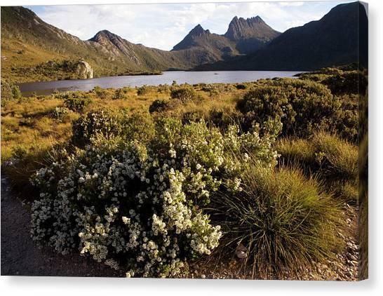 Dove Lake And Cradle Mountain Canvas Print