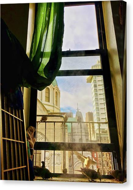 Doves In My Window Canvas Print