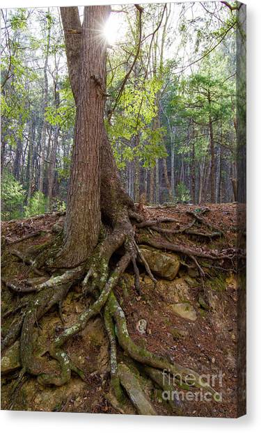 Down In Her Roots Canvas Print