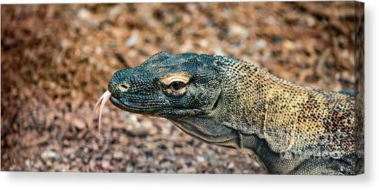 Dragon With No Fire Canvas Print