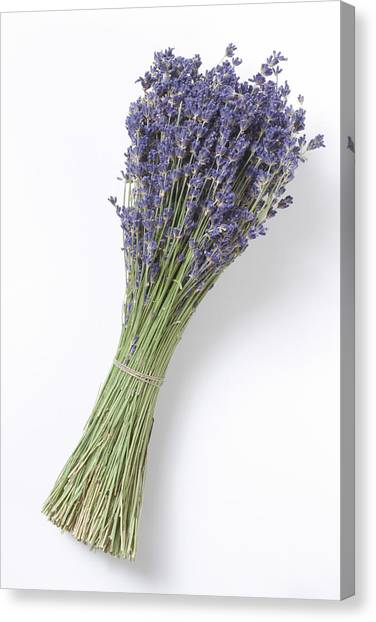 Dried Lavender Bunch, Elevated View Canvas Print by Westend61