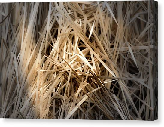Dried Wild Grass I Canvas Print