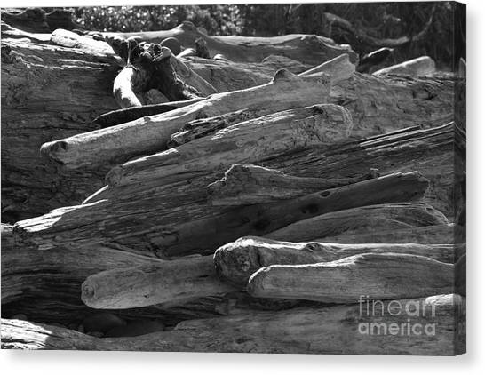 Canvas Print featuring the photograph Drifted Wood by Jeni Gray