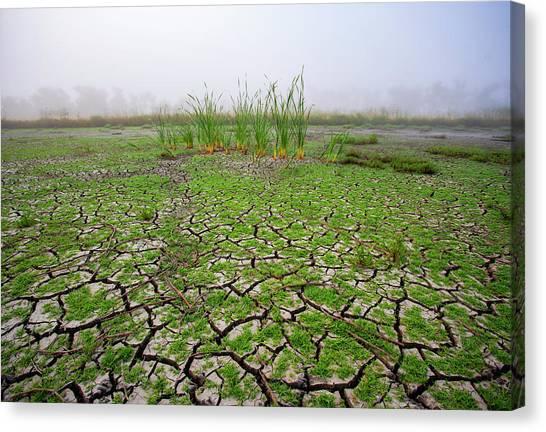 Dry Duck Pond Canvas Print