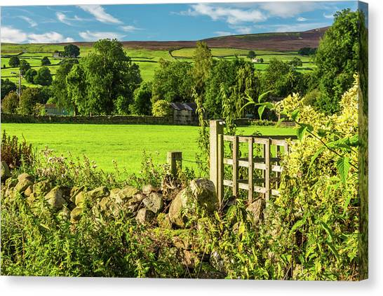 Drystone Wall, Reeth, Yorkshire Dales Canvas Print by David Ross