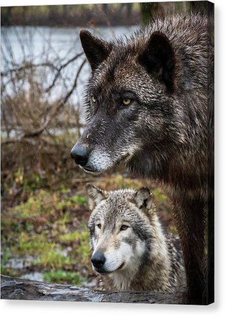 Dual Wolves Canvas Print