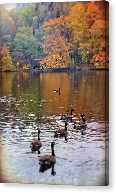 Canvas Print featuring the photograph Ducks In The Muddy River - Olmsted Park  by Joann Vitali