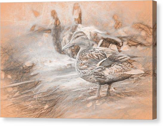 Ducks On Shore Da Vinci Canvas Print