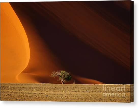 Tall Canvas Print - Dune 40 And Tree, Sossusvlei, Namib by Efimova Anna