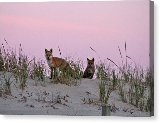 Canvas Print featuring the photograph Dune Foxes by Robert Banach