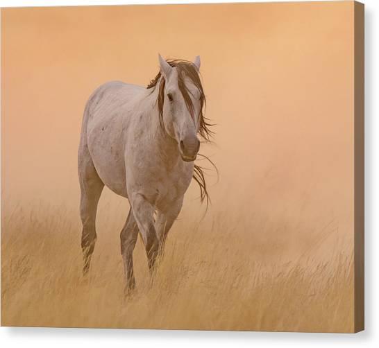 Dusty Evening Canvas Print
