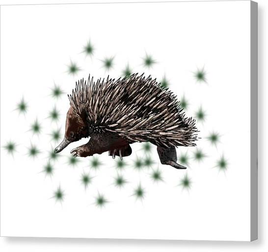 Canvas Print - E Is For Echidna by Joan Stratton