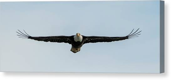Eagle Flying At You Canvas Print